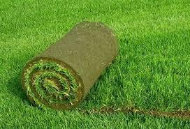 Рулонный газон: благоустройство загородного участка